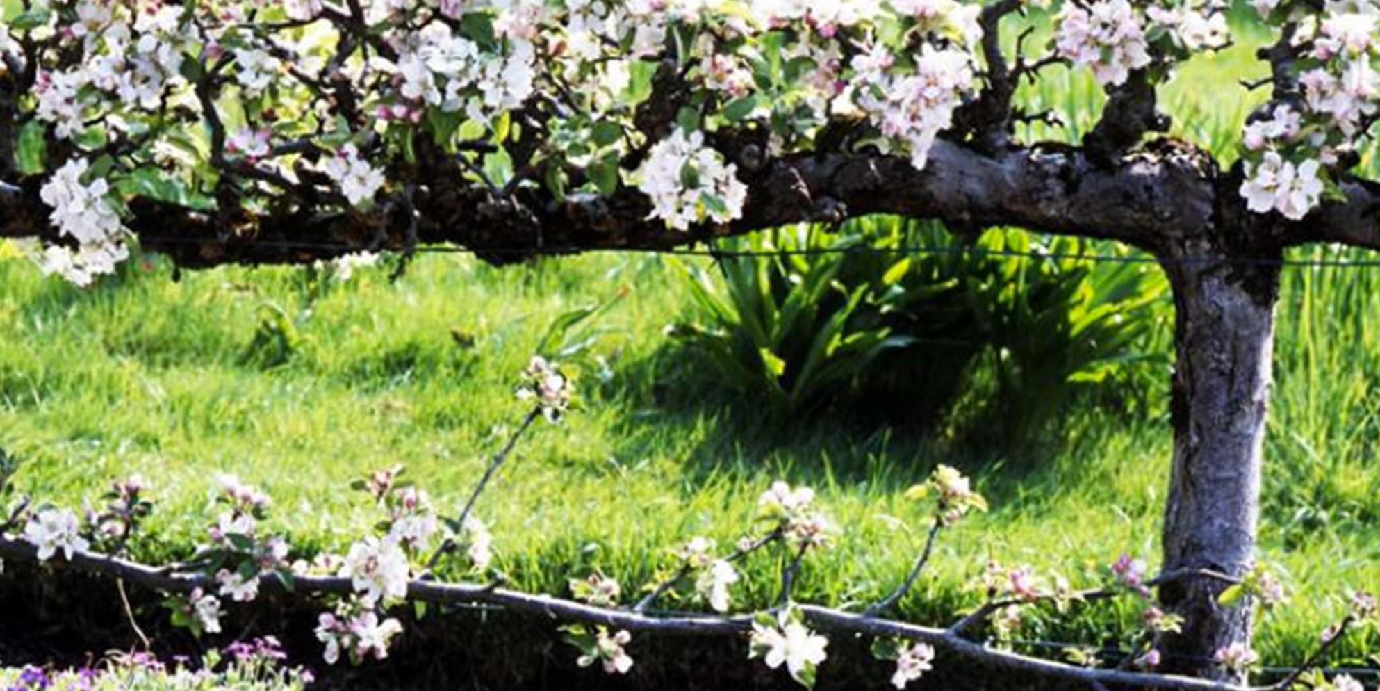 Fondation Claude Monet The Garden In Spring Fondation Claude Monet